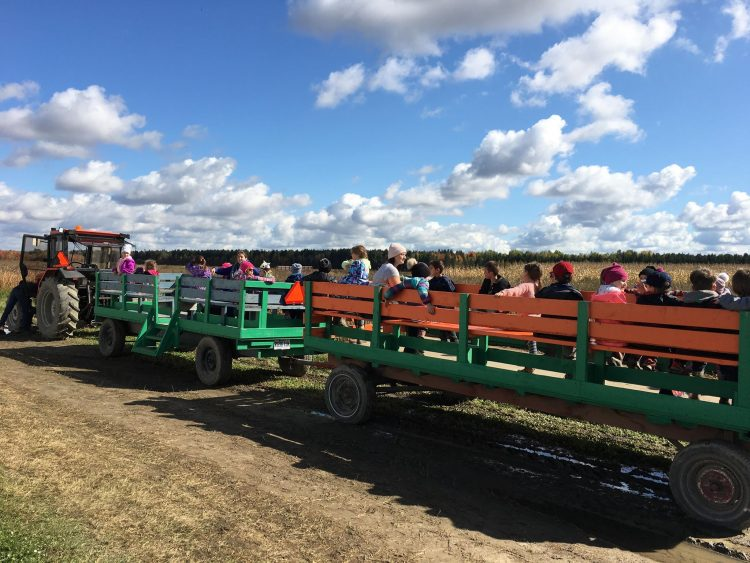 Tracteur - citrouille